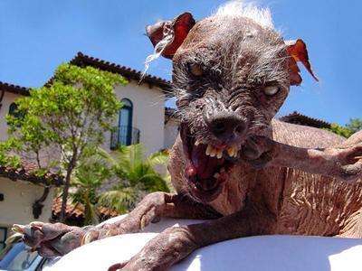 I Passed Freshman Year Sam_worlds_ugliest_dog_dead